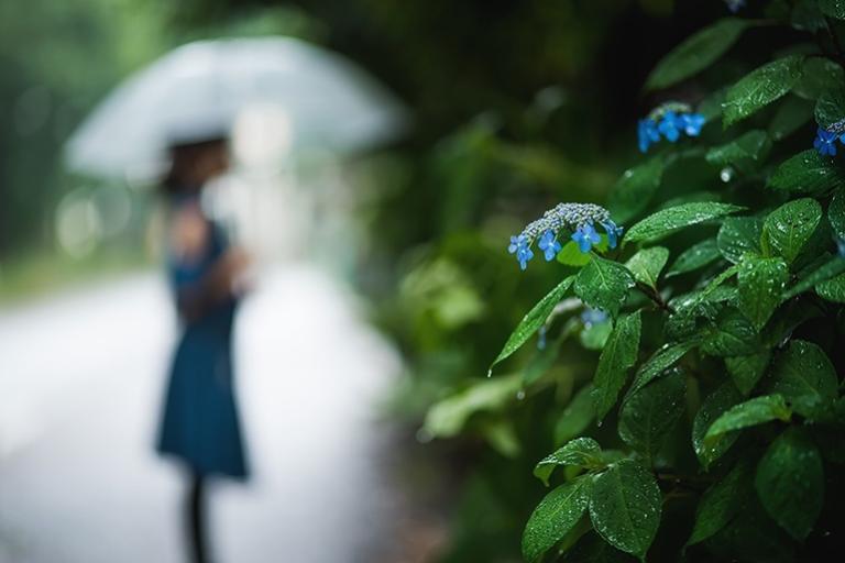 ploaia de vara